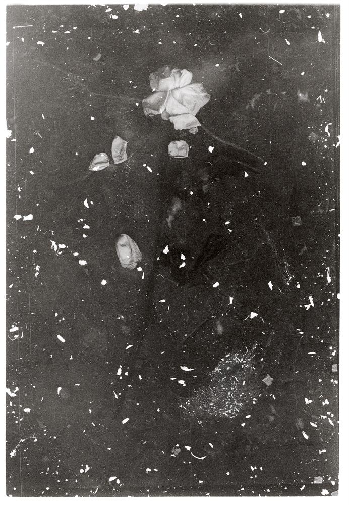 Photographie argentique avec poussières